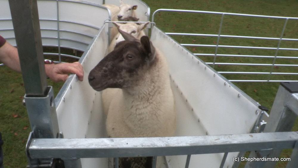 Shepherdsmate - Sheep Equipment