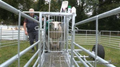 Shepherdsmate sheep Handling Equipment - Mobile or yard Sheep Race with digitial weighing and 3 way drafting