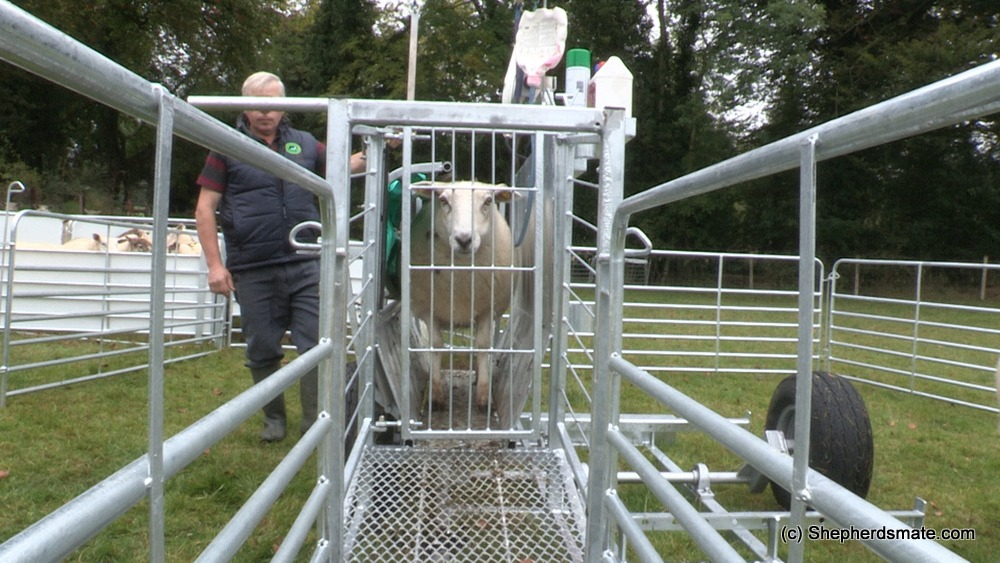 Shepherdsmate sheep Handling Equipment - Mobile or yard Sheep Race with digitial weighing and 3 way drafting
