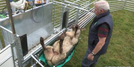Shepherdsmate - Sheep Rollover