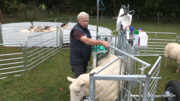 Shepherdsmate sheep Handling Equipment - Mobile or fixed yard Sheep Race with 3 way drafting