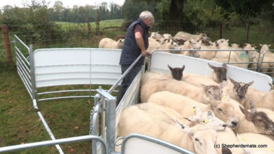 Shepherdsmate sheep Handling Equipment - Mobile or fixed yard Sheep Race with forcing pen