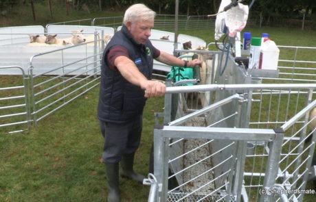 Shepherdsmate sheep Handling Equipment - Mobile or fixed yard Sheep Race with 3 way drafting