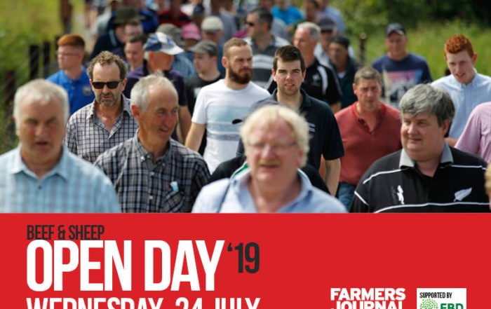 Beef and Sheep Open Day